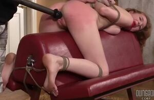 Abbey rain ideal obedience 2